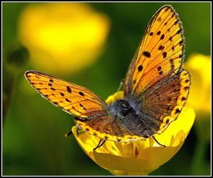 Генезис - Путь Бабочки 2