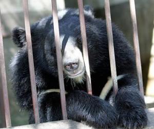 История про медведя в зоопарке